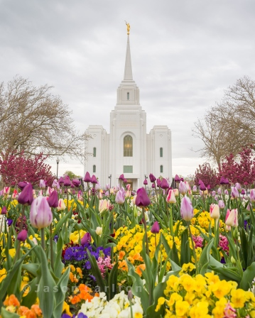 Springtime Flowers at the Brigham City Temple